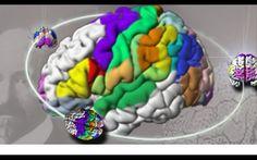"""2013 - 19 de Junio - Crean el atlas del cerebro más detallado del mundo y en 3D - Jülich, Alemania (DPA). Científicos de Alemania y Canadá crearon un nuevo mapa del cerebro en tres dimensiones y 50 veces más detallado que los que existían hasta ahora, informó la prestigiosa revista estadounidense """"Science"""" en su nueva edición.    Para elaborar el nuevo """"atlas cerebral"""", los investigadores seccionaron el cerebro del cadáver de un hombre de 65 años en más de 7.400 láminas."""