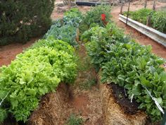 5 reasons straw bale gardening is a better option than traditional planting.