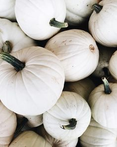 Celebrate the Fall Season with some White Pumpkins as Chic Decor.