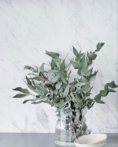 The classic Carrara marble slab splashback toning perfectly with the matte sleek concrete benchtops & beautiful eucalyptus foliage in the kitchen of our Neutral Bay project. Marble Benchtop, Concrete Bench, Splashback, Carrara Marble, Interior Styling, Floral Arrangements, House Design, Kitchen Ideas, Kitchen Design