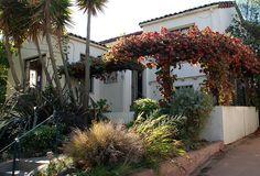 VINE Vitis californica 'Rogers Red' - Rogers Red California Grape | (on the trellis)