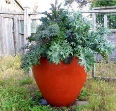 Kale- Mary Martha Collins planter