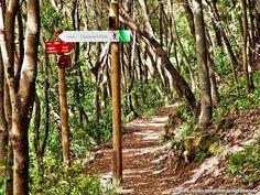#Wandern auf #Teneriffa - Wanderweg bei #Aquamansa ...