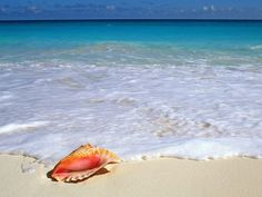 A conch shell gets to go on the ultimate tropical beach vacation...