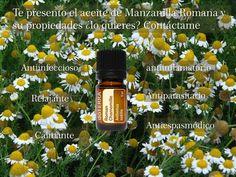 El aceite esencial de manzanilla romana una experiencia única