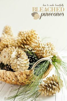 Learn How to Make Beautifully Bleached Pinecones for Fall or Holiday Decor and Crafts