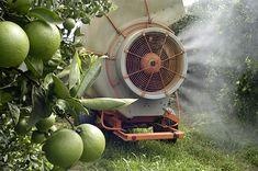 Spraying-Oranges   - Choosing Fruits and Vegetables