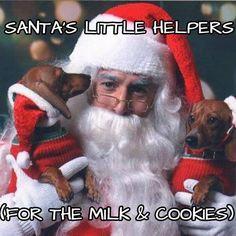 awwwww!!! #dachshund #teckel #doxie