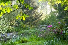 Claire Takacs, Etchingham, East Sussex, England / Spring at King John's Lodge