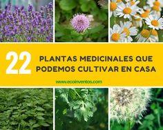 #FITOTERAPIA: 22 plantas medicinales que podemos cultivar en casa http://ecoinventos.com/plantas-medicinales-que-podemos-cultivar-en-casa/