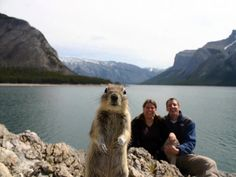 Awesome animal photo bomb