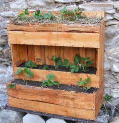 Jardinière verticale en planches de palette...