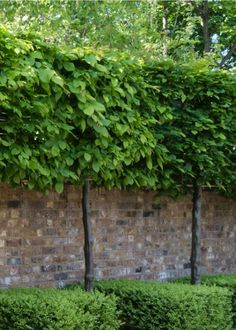 Small Garden Trees Uk, Small Front Garden Ideas Uk, Small Front Gardens, Cottage Garden Plants, Back Gardens, Patio Garden Ideas Uk, Back Garden Design, Fence Landscaping, Small Backyard Landscaping