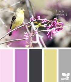 Finch tones