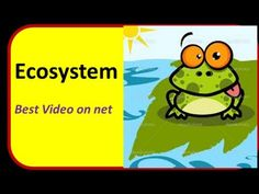 What is an Ecosystem : Definition ,Meaning  (Video for kids)