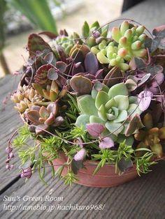 Suu'sGreenRoom ピンクのペイント缶に多肉植物寄せ植え