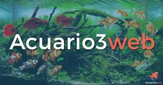 En Acuario3web ayudamos a quién quiera sumergirse en la Acuariofilia y descubrir de la forma más fácil y sencilla este fascinante mundo del acuario.