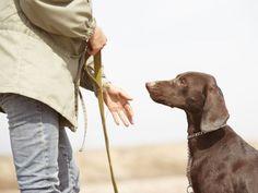 Hund bestrafen: Tipps für die Hundeerziehung – Foto: Shutterstock / Arman Zhenikeyev    www.einfachtierisch.de