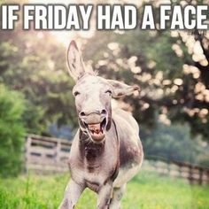 ٩(^ᴗ^)۶ Share funny happy friday meme images from this post to celebrate weekend days. get relief from work stress (best meme collection) Happy Friday Meme, Friday Gif, Funny Friday Memes, Funny Friday Humor, Funny Humor, Tgif Funny, Funny Happy, Funny Love, Hilarious
