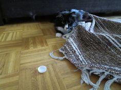 絨毯の下で宝探し。
