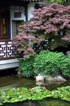 Cool Chinese Garden