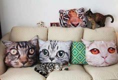 A large set of cat-face pillows for any feline-friendly apartment. - A large set of cat-face pillows for any feline-friendly apartment. Silly Cats, Cats And Kittens, Funny Cats, Crazy Cat Lady, Crazy Cats, Cat Cushion, Cushion Pillow, Deco Originale, Cat Pillow