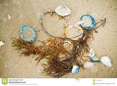 beach seaweed - Google Search