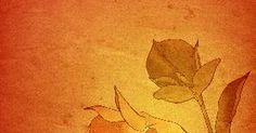 El cuidado de la planta Mandevilla. Con flores llamativas, brillantes y en forma de trompeta, la mandevilla es una planta trepadora hermosa que adornará cualquier enrejado. Con un poco de cuidado y el mantenimiento de invierno, tu enredadera de mandevilla traerá satisfacción y placer año tras año.