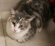 Nora was adopted!