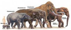 A modern elephant and its ancestors