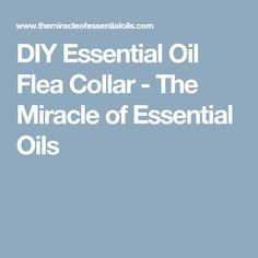 DIY Essential Oil Flea Collar - The Miracle of Essential Oils
