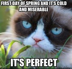 Meet Grumpy Cat memes that will make you LOL. Check Angry Cat Hate, Good and other popular memes. Check also for Grumpy Toad and Grumpy Turtle. Grumpy Cat Quotes, Funny Grumpy Cat Memes, Funny Memes, Grumpy Kitty, Grump Cat, Kitty Cats, Grumpy Baby, Hilarious Quotes, Funny Captions