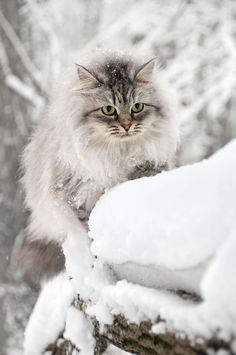 The winter hunter.  ATTACKOFTHECUTE.COM
