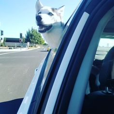 Road trips #dogpictures #dogs #aww #cuteanimals #dogsoftwitter #dog #cute