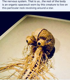 You're basically the Flying Spaghetti Monster. Funny Images, Funny Photos, Best Funny Pictures, Cool Pictures, Random Pictures, Flying Spaghetti Monster, Food Humor, Organic Recipes, Nervous System