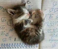 Cute Little Baby Kitten Nsp-time - Aww! More