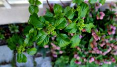 Im Garten der Lustwandelbarkeit Herbs, Plants, Friendship, Garten, Planters, Herb, Plant, Spice