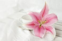 my wedding lily