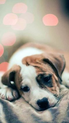 sweet puppy | pet photography #dogs