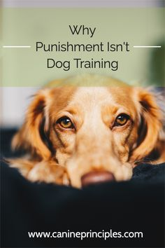 Dogs do learn through punishment, but it always has a fallout and the will affect trust and wellbeing. Positive reinforcement is always the better choice. click the pin #positivereinforcement #noforcenofear Top Dog Names, Most Popular Dog Names, Dog Psychology, Cute Nicknames, Dog Minding, Easiest Dogs To Train, Aggressive Dog, Dog Daycare, Old Dogs
