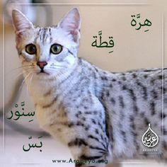 Cat's name in Arabic