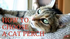 Choosing a Cat Perch | Comfort, Security, Fun for Kitty | Cat Behavior Associates