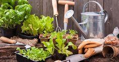 Orto: cosa coltivare a settembre