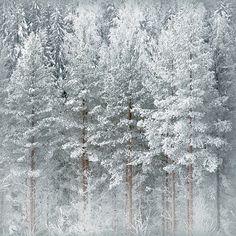 """♕ """"Winter Time"""" by Olli Kekäläinen ~ beautiful."""