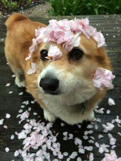 Spring has sprung ~ Hazel