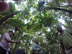 Sensacional passeio pela Floresta Amazônica