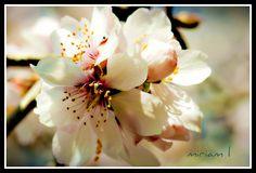 Flores desde mi ventana | por Halea-Kala
