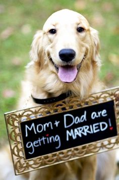 vintage cute wedding dog with wedding sign