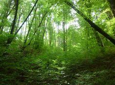 Relato de un mágico paseo por el verde y vivo Bosque de Bertiz. Te aconsejo vivamente su lectura.