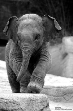 bebe de elefante